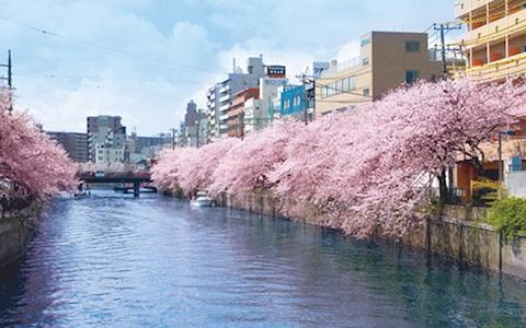 京急電鉄Xリザーブドクルーズ「春の横浜 大岡川クルーズ」を開催