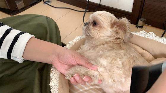 mugi_photo191108c.jpg