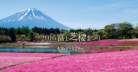 富士山と80万株の芝桜を堪能できる「2016富士芝桜まつり」は4月16日から5月29日まで開催