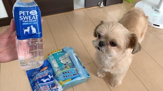 チワシーむぎ「犬の熱中症対策!ペットスエットで水分補給」